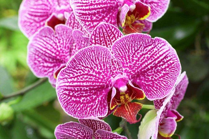 Come coltivare le orchidee in casa donnad - Come curare un orchidea in casa ...
