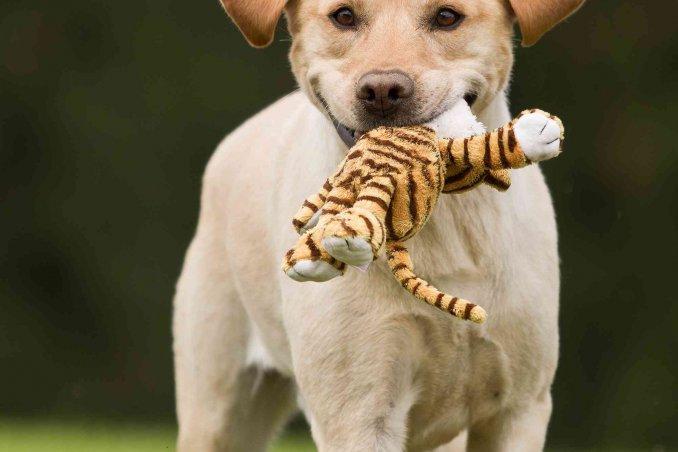 cosa insegnare al cane