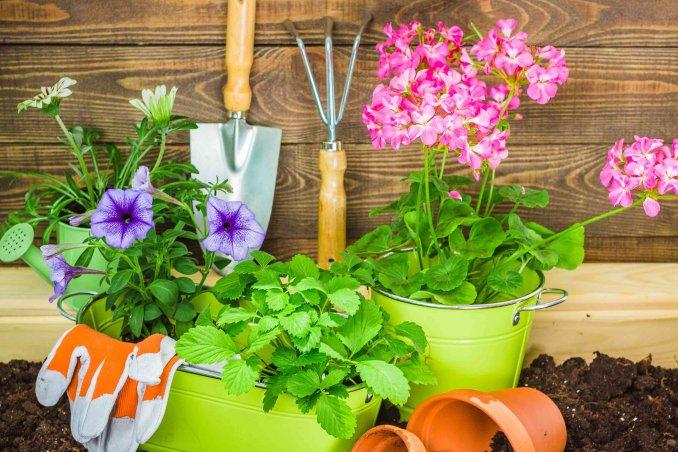 Giardino fai da te idee e consigli donnad - Idee giardino senza erba ...