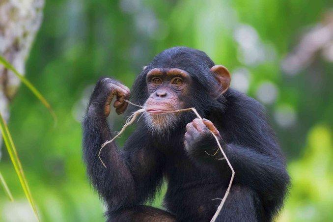 oroscopo cinese scimmia