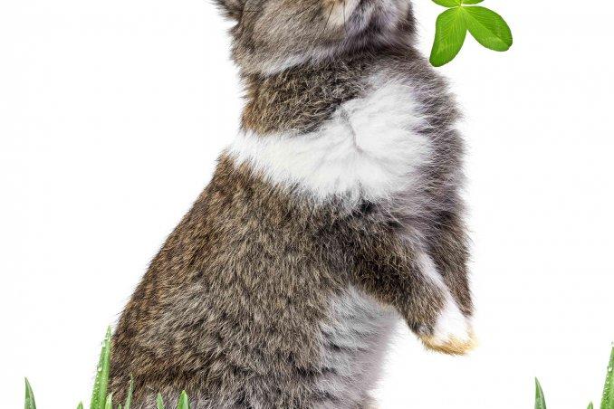 oroscopo cinese lepre o coniglio