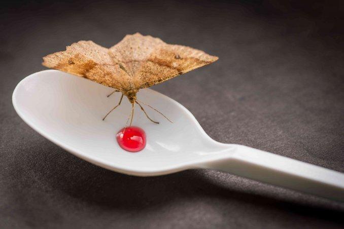 combattere le farfalline o tarme del cibo