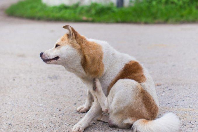 Eliminare le pulci come toglierle dal cane donnad - Eliminare odore pipi cane giardino ...