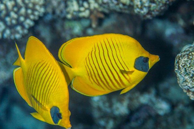 sognare pesci significato