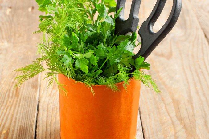 come coltivare il prezzemolo in casa