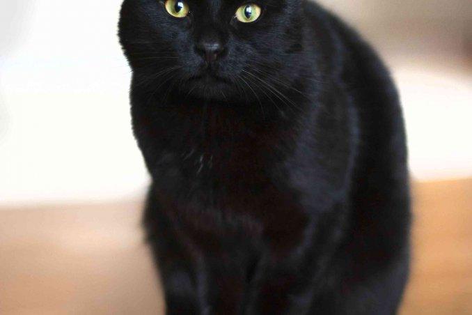 cosa significa sognare gatti neri