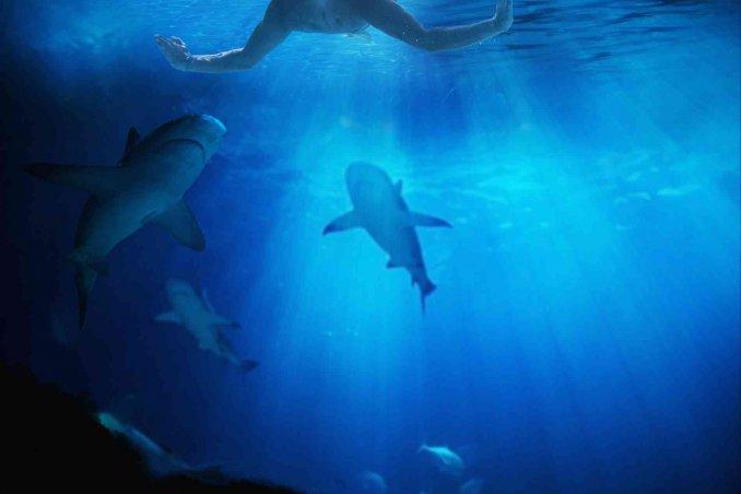 cosa significa sognare squali