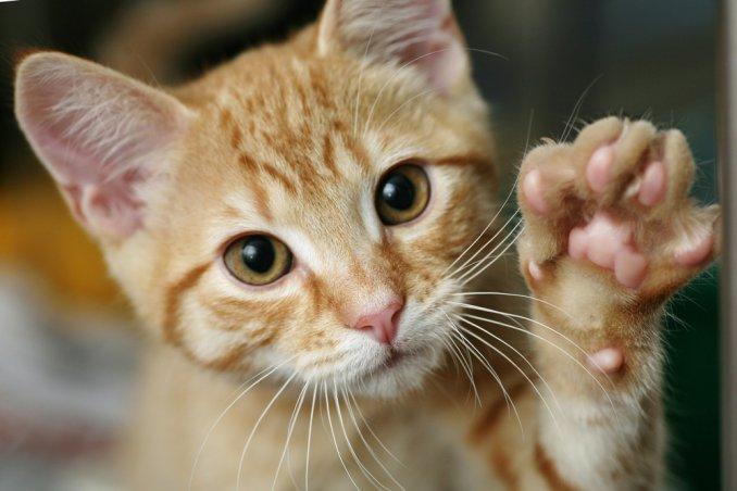 Cibi dannosi per gatti: ecco quali evitare