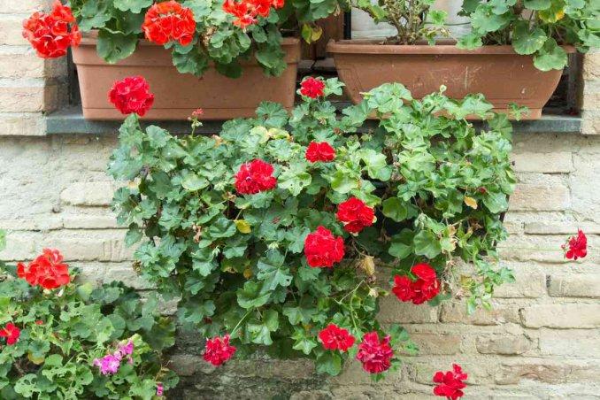 Cosa piantare a marzo sul balcone