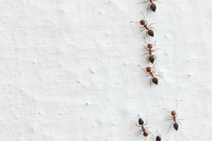 Arriva il caldo arrivano le formiche donnad - Formiche in casa perche ...