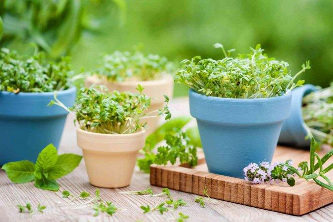 Le Piante Aromatiche : Come coltivare piante aromatiche in vaso donnad