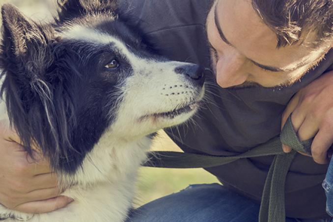 cane animale domestico incidenti problemi distrazioni rimedi