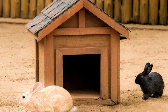 casa per i conigli