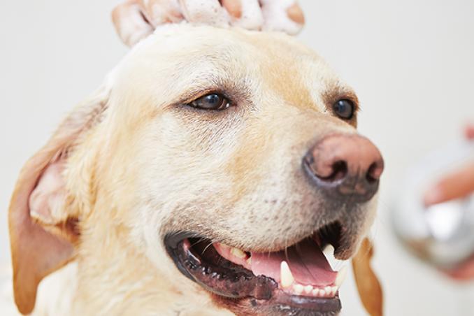 Ogni quanto fare il bagno al cane? | DonnaD