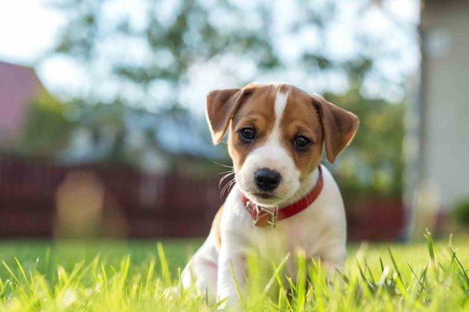 Sterilizzazione del cane costi convalescenza pro e for Casa progetta il trotto del cane