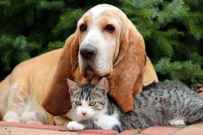 cani e gatti sentono il terremoto