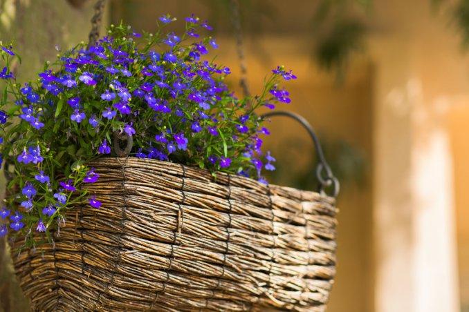 fiori primaverili, fiori da piantare maggio, fiori balcone, fiori maggio