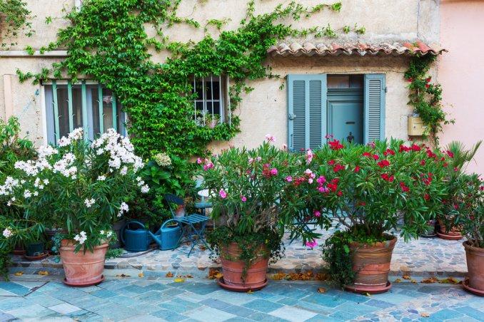 Come coltivare l\'oleandro in vaso, 5 consigli per ornare il balcone ...