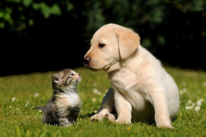 Adottare Un Cucciolo Di Cane O Gatto 10 Cose Da Sapere Prima Donnad