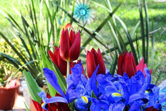 fiori da seminare in autunno, fiori autunnali, bulbi primaverili