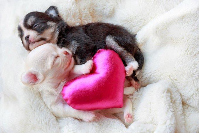 allattare cuccioli cane, allattamento artificiale cane