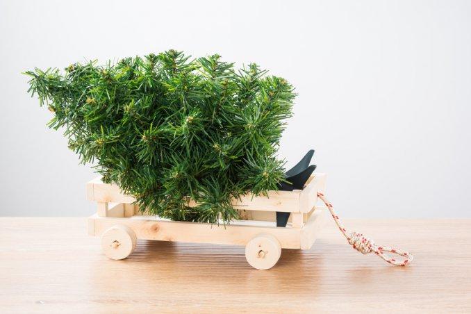 dove buttare albero di Natale