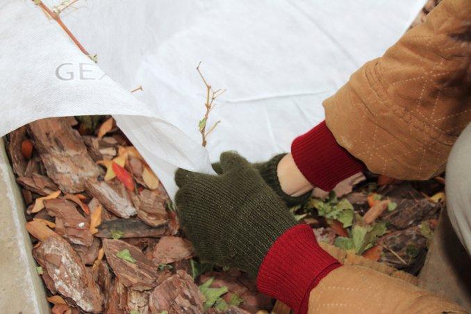 proteggere piante dal freddo, proteggere radici dal freddo, giardinaggio d'inverno
