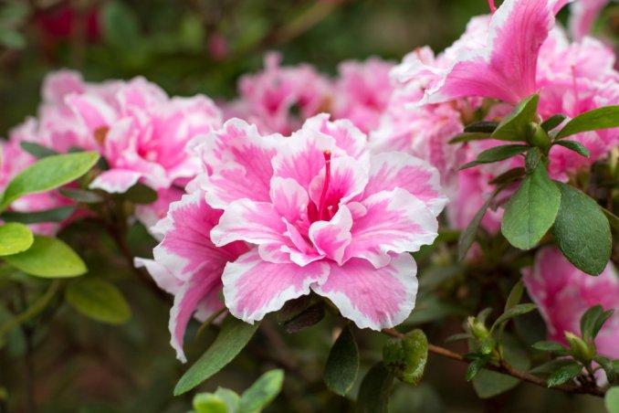 I fiori pi belli per chi ha il pollice verde donnad for Giardinaggio e fiori