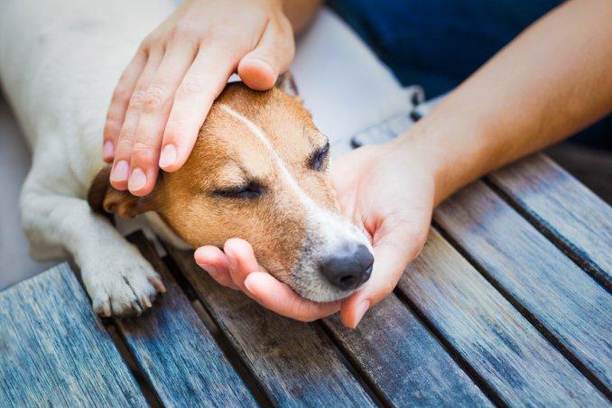 cane, vomito, veterinario