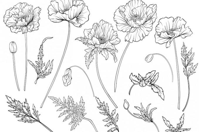 come disegnare fiori