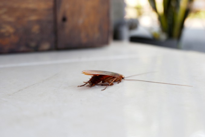 scarafaggi in casa, scarafaggi cause, rimedi scarafaggi