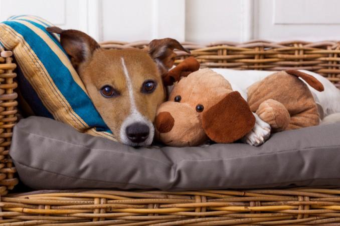 Come lavare il cuscino del cane per un'igiene perfetta