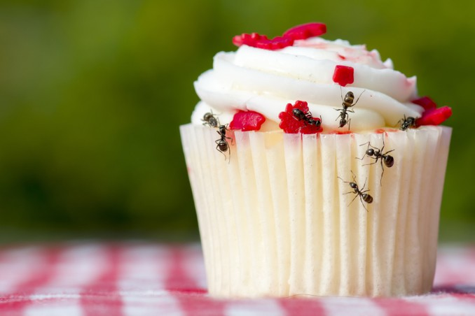 formiche, cucina, debellarle