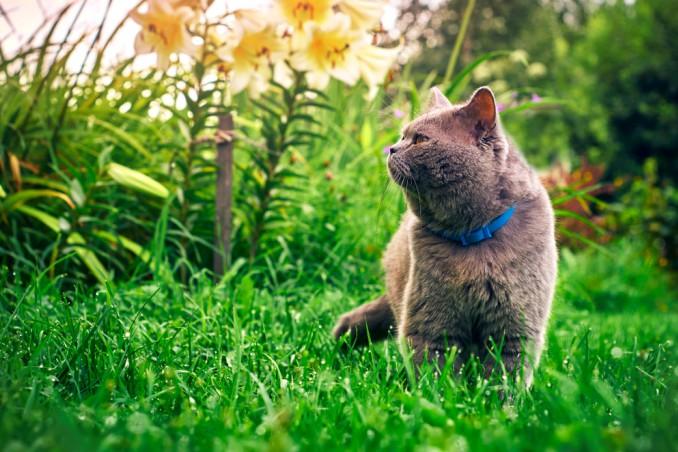 come allontanare gatti