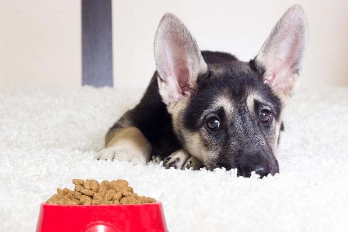 Cucciolo Di Cane Che Non Mangia Solo Cause E Soluzioni Donnad