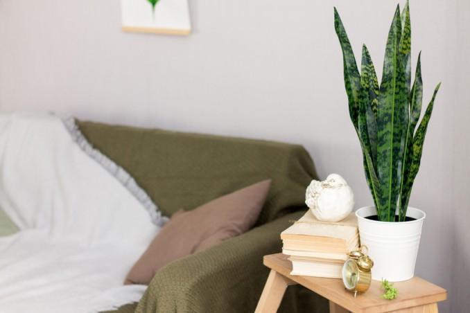 Piante Da Appartamento Lingua Di Suocera.Lingua Di Suocera 7 Consigli Utili Donnad