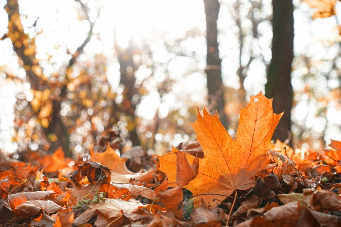 poesie di autunno
