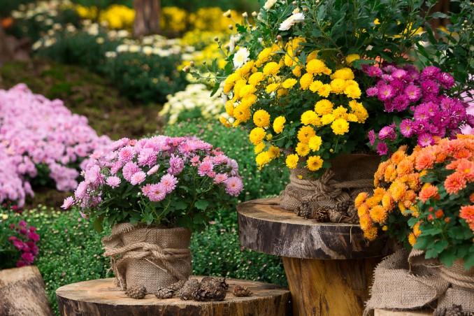Fiori autunnali a novembre i magnifici 5 donnad for Immagini fiori autunnali