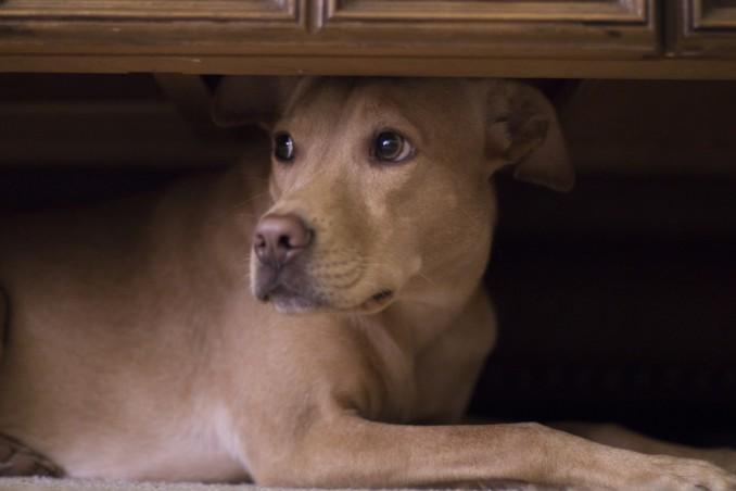 cane, paura, tuoni