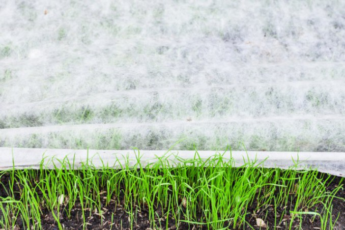 curare giardino inverno, giardinaggio inverno