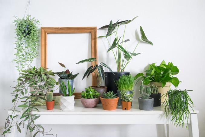 Piante Da Appartamento Come Curarle.Come Curare Le Piante Da Interno 7 Errori Da Evitare Donnad