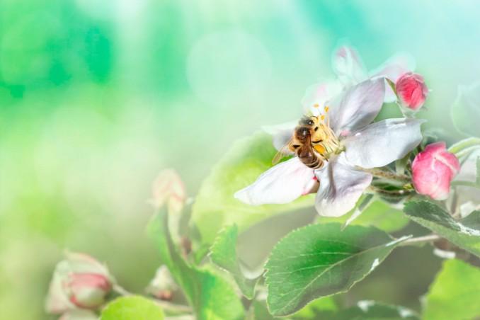 sognare api, sognare api significato, cosa significa sognare api