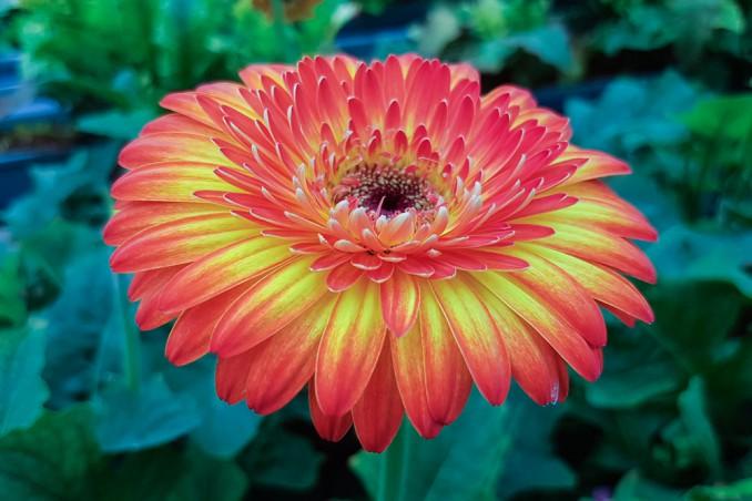 Pianta Camera Da Letto Ossigeno : Piante per camera da letto etdg piante perfette per la camera