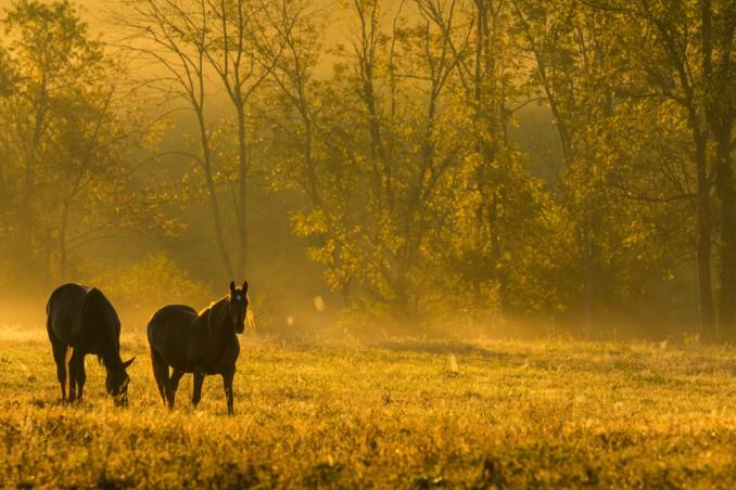 sognare cavalli