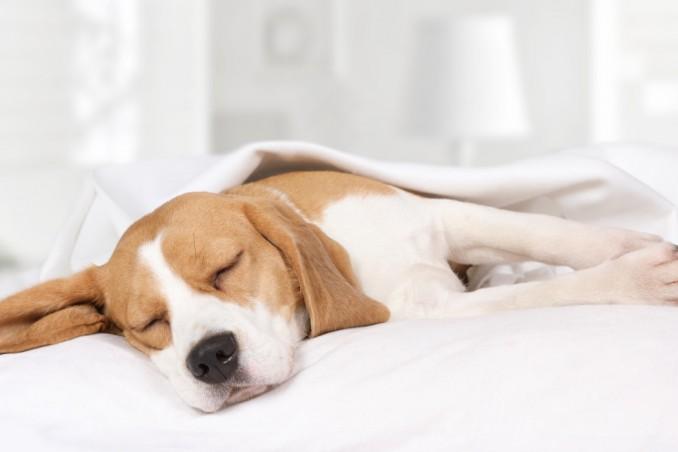 Cane Che Dorme Disegno.Cane Che Piange Nel Sonno Perche Succede Donnad