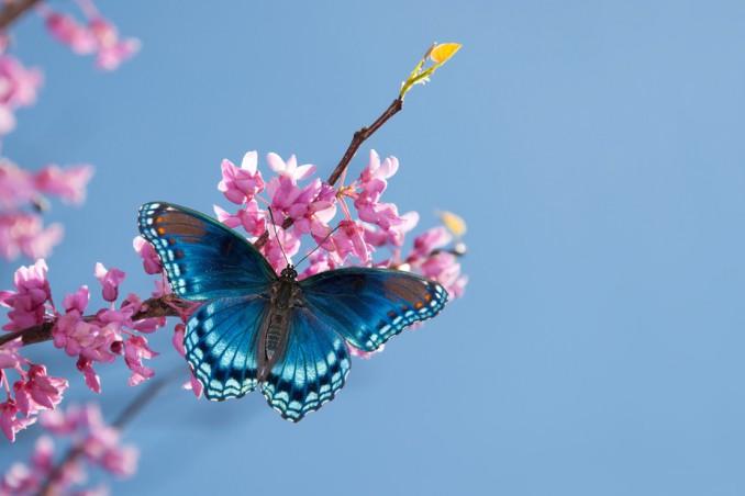 fiori che attirano farfalle, fiori preferiti da farfalle, cibo per farfalle
