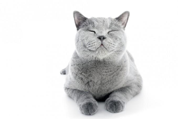 Sfondi gatto animali cibo opera d arte pesce blu cartone