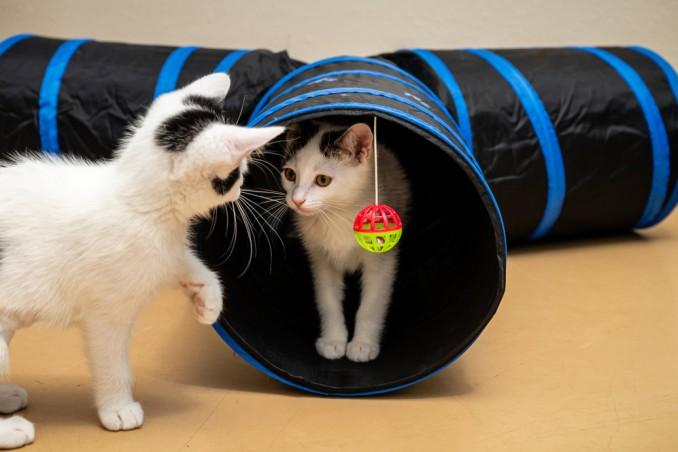 tunnel gioco gatti