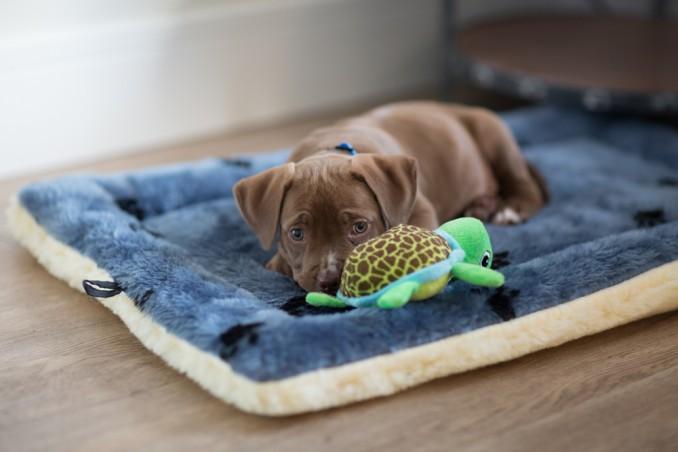 cura cucciolo cane