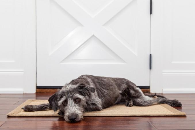 come aggiustare porta mangiata cane, come aggiustare porta, riparare porta